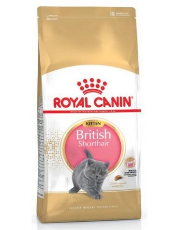Royal Canin British Shorthair Kitten karma sucha dla kociąt, do 12 miesiąca, rasy brytyjski krótkowłosy 400g
