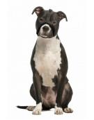 Grande Finale Kaganiec dla psa pekińczyk rozmiar 1 (12-20cm)