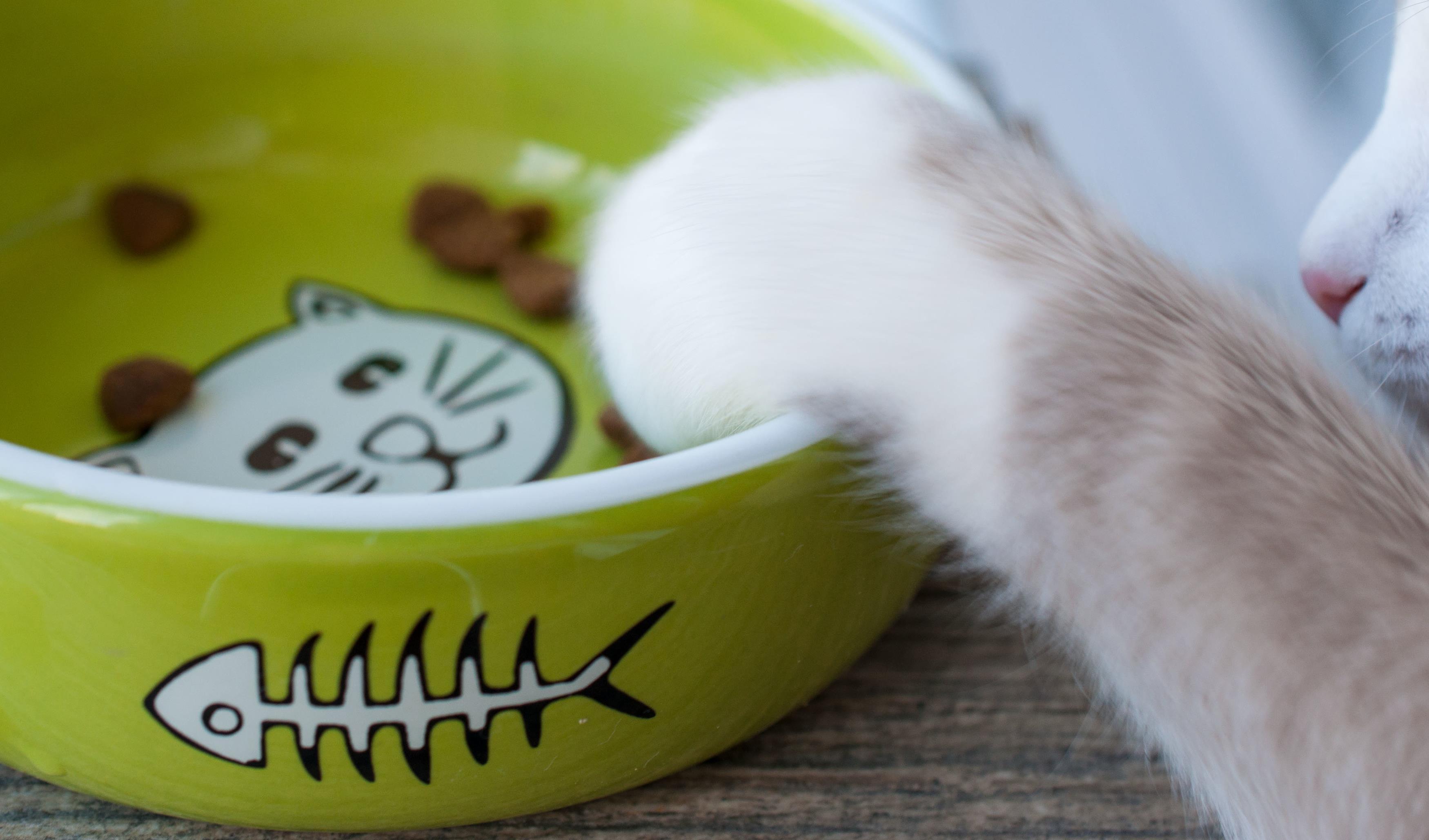 Łapka kotka w misce