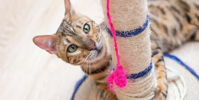 drapaczka dla kota - ochrona przed drapaniem mebli