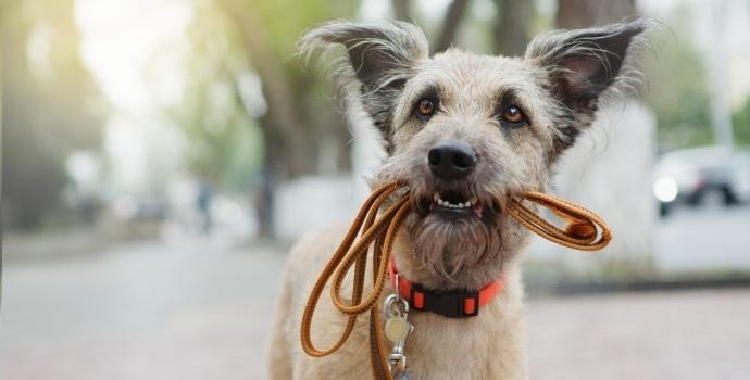 Pies ze smyczą przyczepioną do obroży
