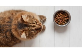 Jaka karma dla kota?