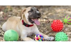 Edukacyjne, interaktywne i kreatywne zabawki dla psa