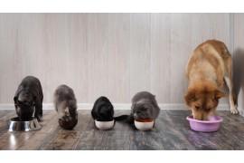 Dlaczego karma dla kota nie powinna zawierać zbóż?