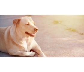 Żywienie psa z otyłością