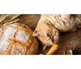 Najlepsze bezzbożowe karmy dla kota