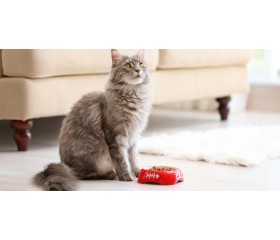 Kot z alergią pokarmową - jak go karmić?