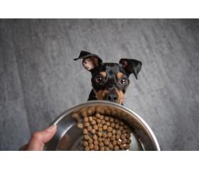 Szeroki wybór karm dla psa Josera