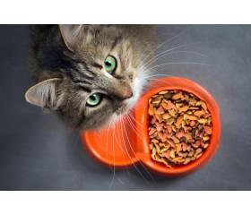 Kiedy zmienić kotu karmę? To musisz wiedzieć!