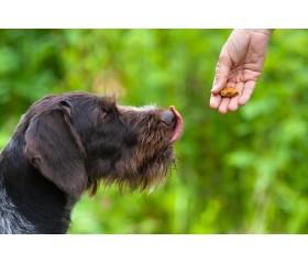 Jak nagradzać psa? Poznaj sekrety motywacji i dobrze wyszkol swojego pupila!