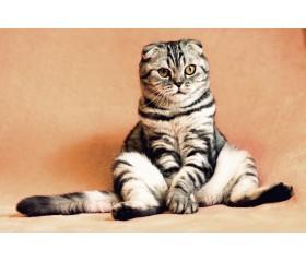 Zapalenie trzustki u kota - jakie są objawy i jak leczyć?
